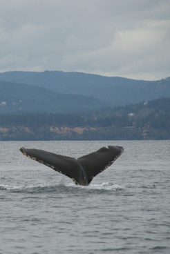 Whales Ahoy